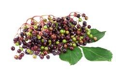 Elderberry при листья изолированные на белизне Стоковая Фотография