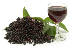 Elderberry Royalty Free Stock Photography