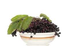 Elderberry Royalty Free Stock Photo