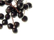 Elderberry Stock Image