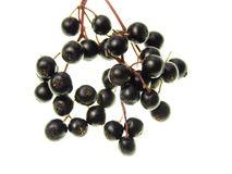 Elderberry Stock Photos