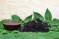 Elderberry Стоковая Фотография RF