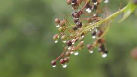 elderberry metrajes