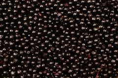 Elderberry background Stock Photos
