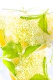 Elderberry flower drink with  lemon Stock Photo
