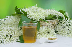 Elderberry flower tea and elderberry flowers Stock Photo