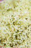 Elderberry flowers detail Stock Photos
