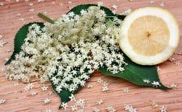 Elderberry flowers Stock Photos