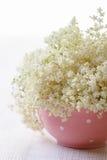 Elderberry flowers Stock Images