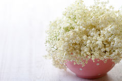 Elderberry flowers Stock Photography