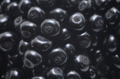 Elderberry fruit Royalty Free Stock Image