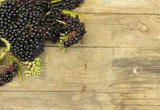 Elderberry fruit (Sambucus ebulus) Stock Photos