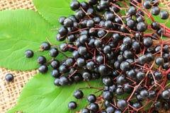 Elderberry (Sambucus Berries) Royalty Free Stock Images