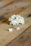 Elderberry (Sambucus ebulus) flower Royalty Free Stock Image