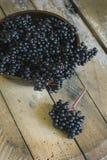 Elderberry (Sambucus ebulus) fruit Royalty Free Stock Image