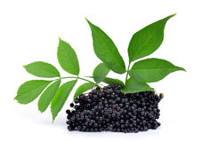 Elderberry Stock Image