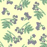 Elderberry seamless pattern. Colorful design for textile, wallpaper, fabric, decor. vector illustration