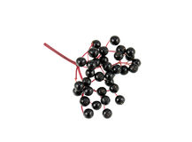 Elderberry Sprig Royalty Free Stock Images