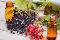Elderberry, viburnum, medicines. Stock Images