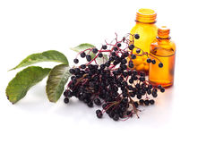 Elderberry on white Royalty Free Stock Photos