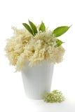 Elderflower Stock Image