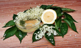 elderflower Stockbild