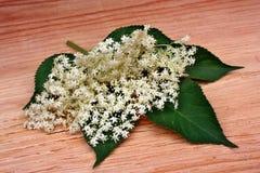 elderflower Photo libre de droits