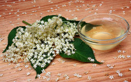 elderflower Stockbilder
