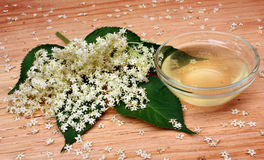 elderflower Arkivfoton