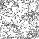 Elderflower bezszwowy wzór ilustracji