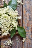 Elderflower blossom flower in wooden background. Edible elderberry flowers add flavour and aroma to drink and dessert.  royalty free stock photography