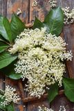 Elderflower blossom flower in wooden background. Edible elderberry flowers add flavour and aroma to drink and dessert. Elderflower blossom flower on wooden royalty free stock photography
