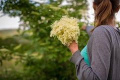 Elderflower de la cosecha de la mujer joven Imagen de archivo libre de regalías