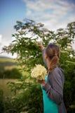 Elderflower de la cosecha de la mujer joven Fotografía de archivo