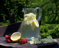 Elderflower-Getränk Stockfotos