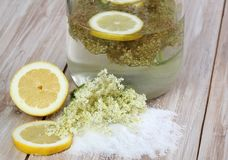 Elderflower lemonade, Sambucus nigra Stock Images