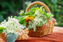 Elderflower and other medicinal herbs Stock Photos