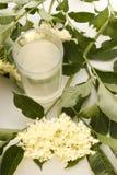 Elderflower-syrup in a glass. Homemade elder flower syrup in a glass Stock Images