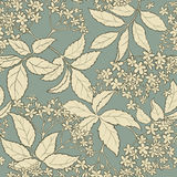 Elderflower vector pattern. Elderflower vector seamless pattern on color background Stock Photos