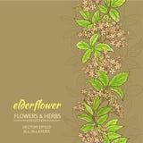 Elderflower vektorbakgrund Arkivbild