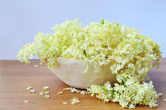Elderflower Royalty Free Stock Photos