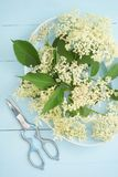Elderflowers on a blue plate Royalty Free Stock Photography