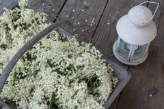 Elderflowers collect. Elder flowers collect in a wooden basket Stock Photos