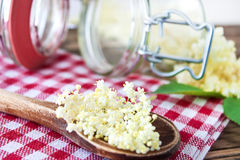 Elderflowers Royalty Free Stock Photo