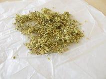 Elderflowers to dry on paper Stock Photos