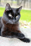 Elderly Cat 2. Twenty years old, this senior cat rests on a warm day Stock Photo