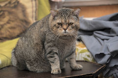 Elderly cat Royalty Free Stock Photos
