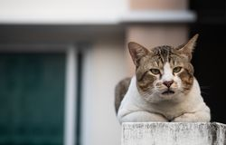 The elderly cat sitting and looking at the camera, selective focus. The elderly cute cat sitting and looking at the camera, selective focus royalty free stock image