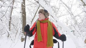 Elderly Caucasian smiling man with Hiking Sticks walks through a snowy forest. Portrait video shooting. Thick dense. Thicket of trees in the snow-covered forest stock video