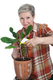 Elderly cheerful woman sprinkles flower Royalty Free Stock Photos